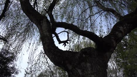 Tree-branch-patterns-in-spring