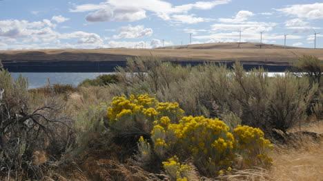 Washington-rabbit-bush-and-wind-turbines