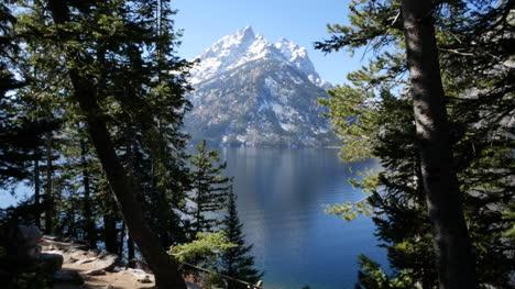 Wyoming-Teton-Peak-Enmarcado-Con-árboles-En-Jenny-Lake
