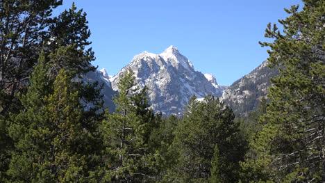 Wyoming-mountain-peak-beyond-trees