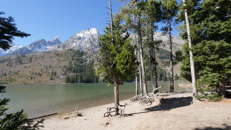 Wyoming-trees-on-shore-of-Jenny-Lake-in-the-Grand-Tetons
