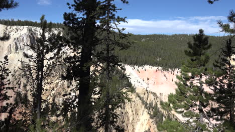 Yellowstone-lodgepole-pines-and-canyon-pan