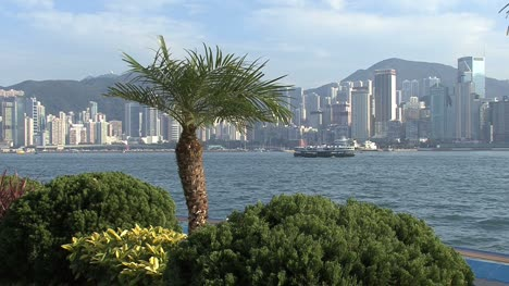 Victoria-Harbor-Hong-Kong-with-palm