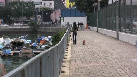 Hong-Kong-woman-walking-dog