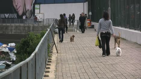 Hong-Kong-walking-dogs