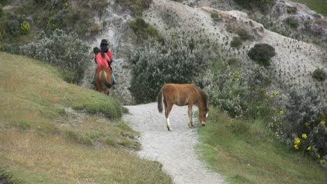 Ecuador-Horse-and-colt