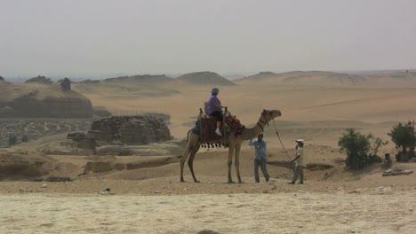 Ägypten-Kamel-Und-Wüste-In-Gizeh