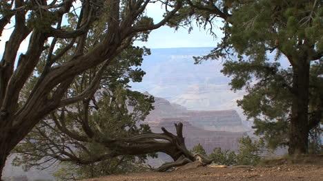 Arizona-canyon-framed-in-trees
