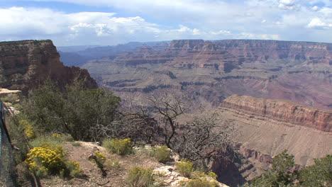 Arizona-Grand-Canyon-with-flowers