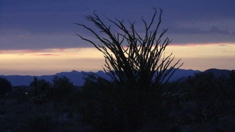 Arizona-desert-after-sunset-with-ocotillo