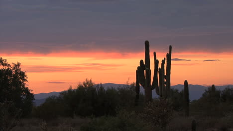 Atardecer-Del-Desierto-De-Arizona-Con-Racimo-De-Saguaro