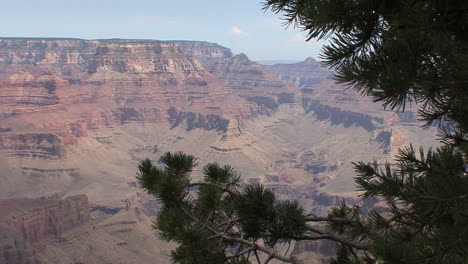 Arizona-Grand-Canyon-scene-with-pine