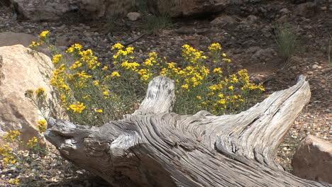 Arizona-Grand-Canyon-wood-&-flowers