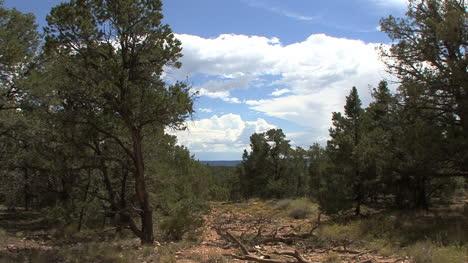 Arizona-trees-&-sky