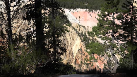 Yellowstone-view-of-canyon-and-pine-trees