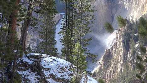 Yellowstone-view-of-lower-falls-through-pine-trees