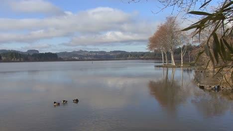 Ducks-on-Silver-Lake