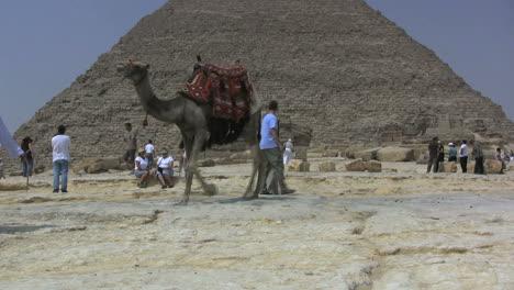 Ägypten-Große-Pyramide-Und-Kamel