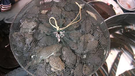 Hanoi-toads-in-market