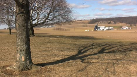 Lancaster-farms-with-tree-abd-bird