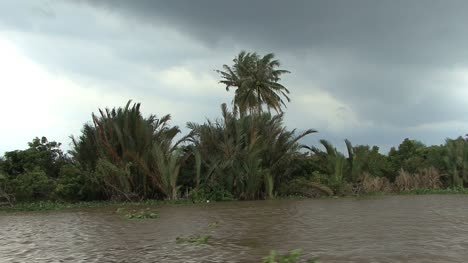 Mekong-scene-with-palm-trees