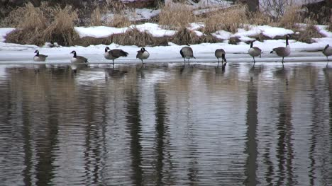 Pond-with-geese-in-New-York-state