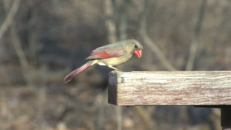 Alimentación-Cardinal-Femenina