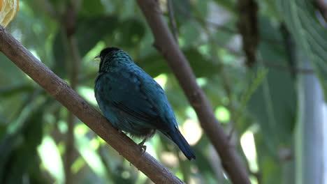 Florida-bird-in-tree