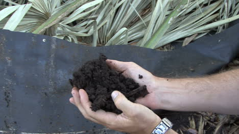 Florida-Handfull-of-soil