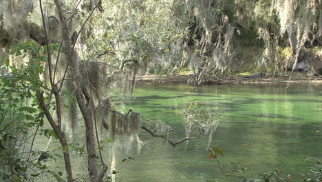 Florida-Manatee-springs