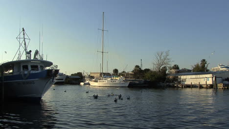 Tarpon-Springs-boats-and-pelicans