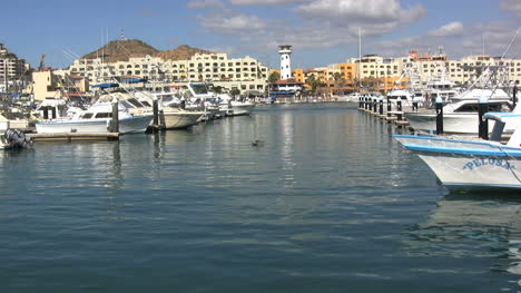 Baja-Cabo-San-Lucas-harbor-with-pelcan