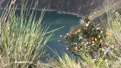 Ecuador-crater-lake-vegetation