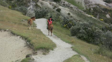 Ecuador-Horse-colt-and-path-at-crater-lake