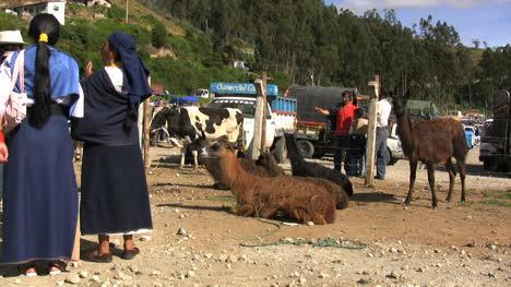 Ecuador-women-and-llamas-in-market