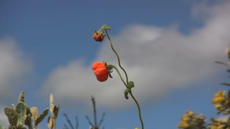 Ecuador-wild-flower