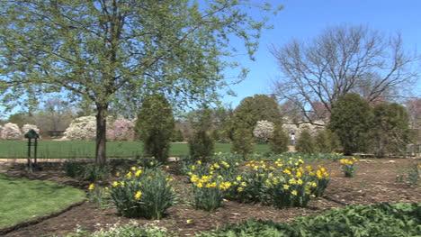 Wisconsin-Madison-garden-blossoms-2