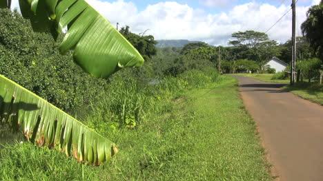 Camino-Rural-Kauai-Y-Hojas-De-Plátano