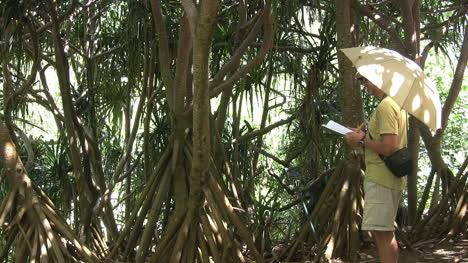 Hawaii-Kauai-Identificando-Plantas-Con-Un-Libro.