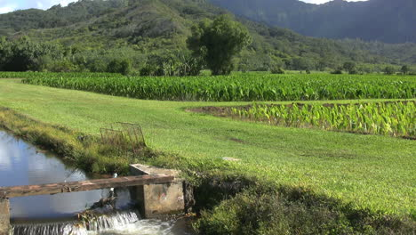 Irrigation-canal-and-taro-patches-in-Kauai
