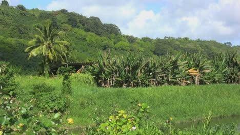 Paisaje-De-Kauai-Con-Plátanos