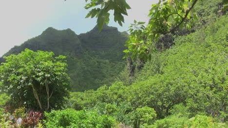 Kauai-Mountain-scenery-with-trees