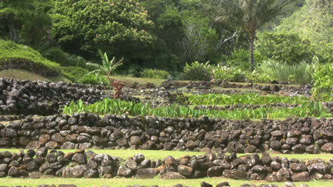 Terrazas-De-Piedra-Kauai-Con-Plantaciones-De-Taro