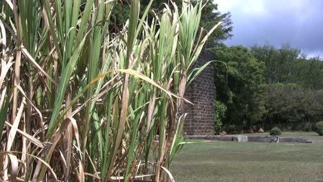 Sugar-cane-and-mill-ruins-in-Kauai