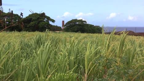Sugar-cane-and-sugar-mill-in-Kauai