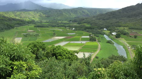 Vista-Kauai-De-Arrozales-Verdes