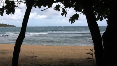Kauai-Waves-beach-and-trees