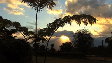 Maui-Fern-frames-sunrise