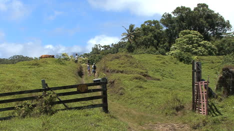 Maui-Hikers-climb-hill-and-scare-cow