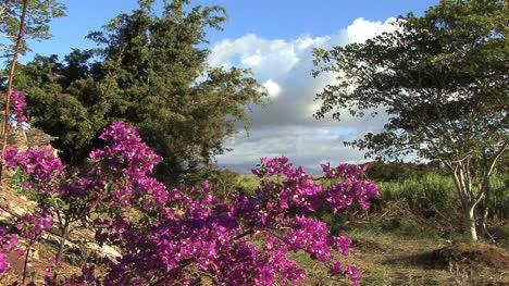 Maui-Landscape-with-flowers-3